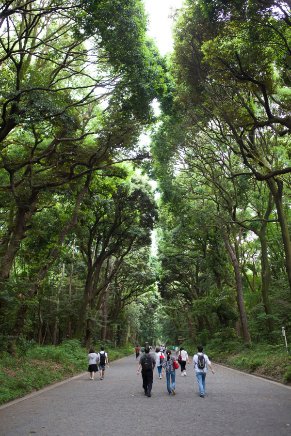 The beautiful forest right outside the Shinto temple