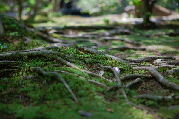 This beautiful moss(?) covered most of the grounds of Honen-in