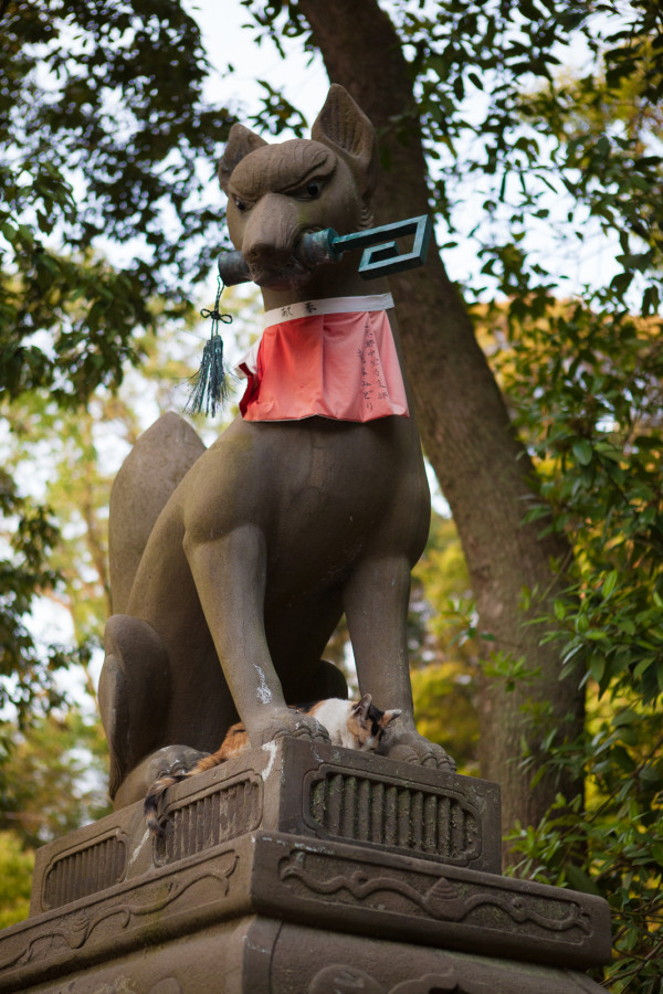 Fox statue at Fushimi Inari (the entire temple had a fox theme as foxes are thought to be Inari's messengers)