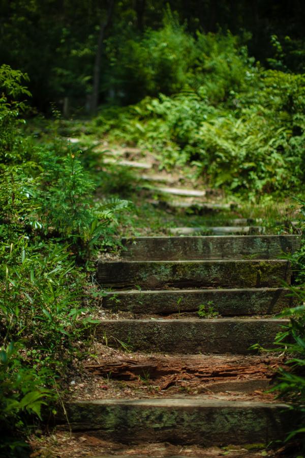 Path to the woods at Kiyomizu-dera temple
